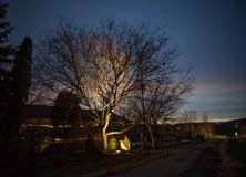 Coastal Source Tree Uplights 2
