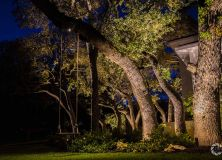 Coastal Source Tree Uplights